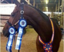 Congratulations to Madelyn Bricken and former WSI sale horse Wynsum